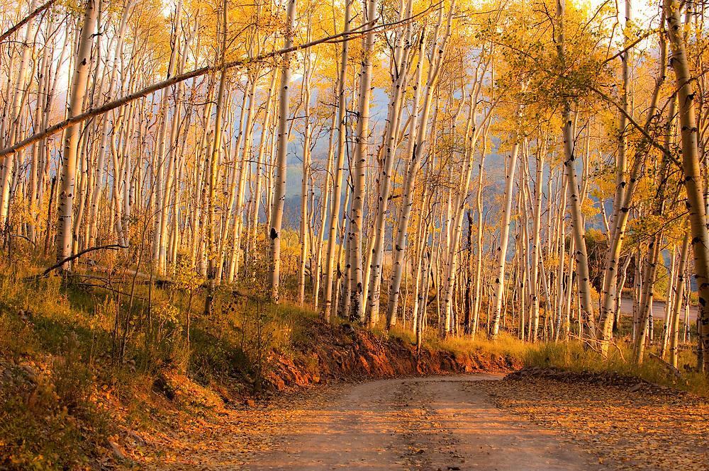 A winding, riveted road featuring the beloved aspen, Ridgway to Telluride, Colorado
