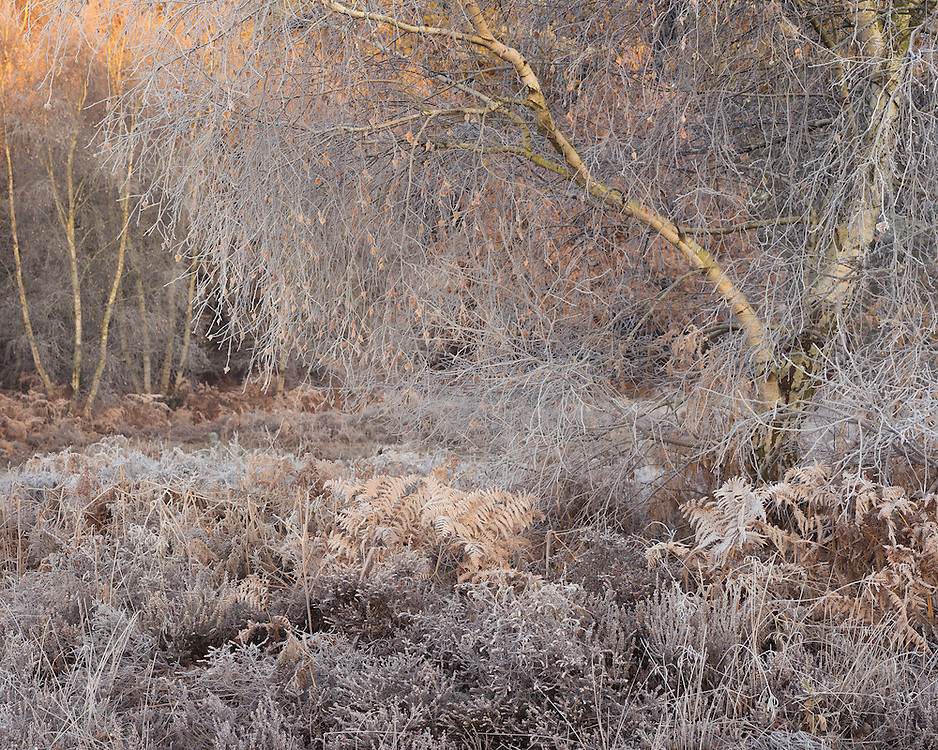 Another from Knettishall Heath
