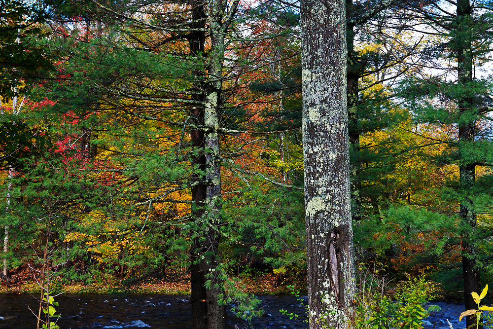 Fall colours near Conway, New Hampshire,New England