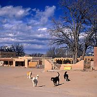 USA, New Mexico, Santa Fe. Pueblo dogs greet visitors to San Ildefonso Pueblo.