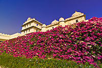 Bougainvillea inside the City Palace, Udaipur, Rajasthan, India