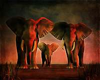"""Hi There!"" is the English translation of this piece. You are being greeted warmly by a family of elephants against a scenic, calming, natural backdrop. These elephants are aware that you have come closer, and they are welcoming you to what is likely their home. What are you going to do next? Is there even something you can say in a situation such as this? Bonjour La is a beautiful scene of nature, and it is available in a variety of forms. This includes canvas prints, metal prints, acryl prints, or framed prints. This piece is also available across numerous interior products. .<br />