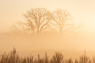 Morning fog  on Nov. 10, 2020.