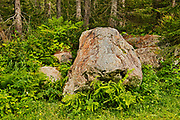 Ferns and rocks alongside a trail in the boreal forest<br />Gaspésie National Park (not a Canadian national park)<br />Quebec<br />Canada