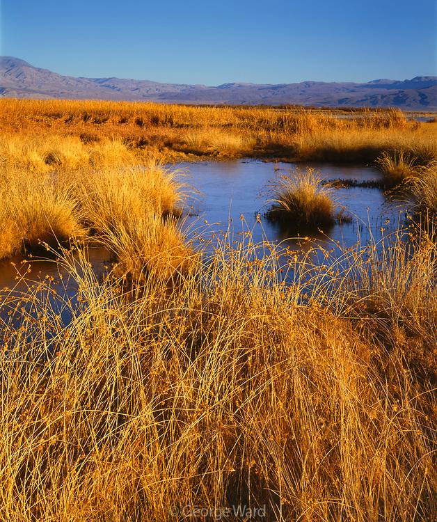 Saline Valley Marsh, Saline Valley, Death Valley National Park, California