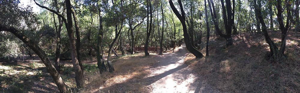 Shoreline Trail Panorama, China Camp State Park, San Rafael, California, US