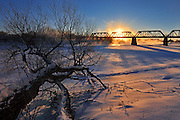 Fallen tree along the Red River with the Waterfront Bridge from Stephen Juba Park.<br />Winnipeg<br />Manitoba<br />Canada
