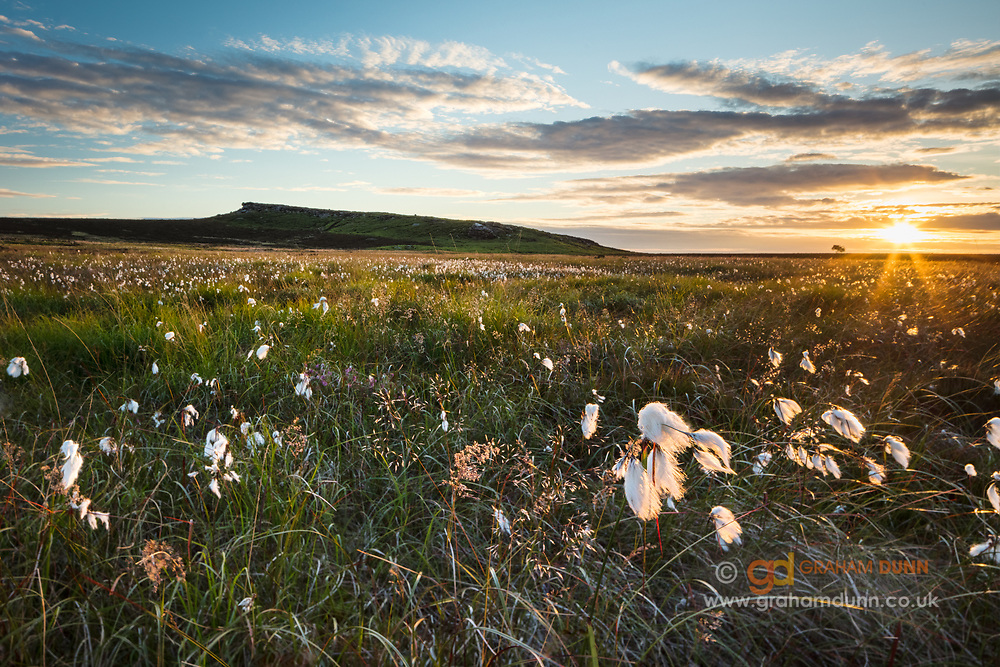 The setting sun backlights cottongrass in the moorland below Stanage Edge and Cowper Stone in the Peak District. A summer sunset in the landscapes of Derbyshire, England, UK.