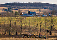 An Amish farmer tills just prior to the first day of spring in Richfield Springs, N.Y.