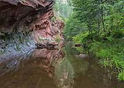 Red rock reflections in West Fork, Oak Creek Canyon, Sedona