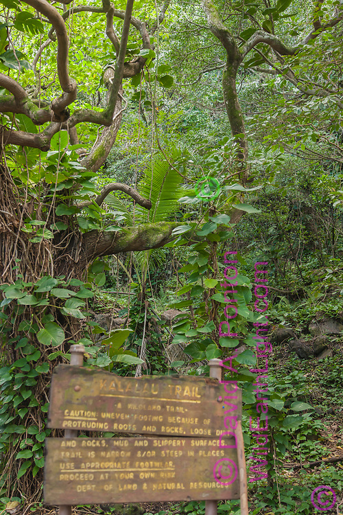 Hardship warnings on the trail sign at the start of the Kalalau Trail with hala tree on the Napali Coast of Kauai, Hawaii, © David A. Ponton