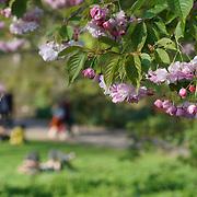 UK Weather: Spring sunshine in Green park and St James Park