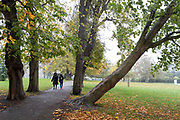 Two park users walk towards a beech tree which is leaning at forty-five degrees away from a path through a grove of others in Ruskin Park, a south London green space, on 31st October 2020, in London, England.