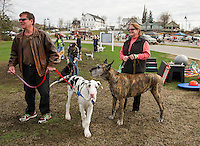 Mike and Lisa Brien with their great danes 5 month old puppy Cooper at 96 lbs and 7 year old Rizzo during Saturday's Bow Wow Test at Opechee Inn and Spa.   (Karen Bobotas/for the Laconia Daily Sun)
