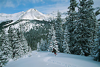 Backcountry skiing into an evergreen forest in the Collegiate Peaks Wilderness Area.