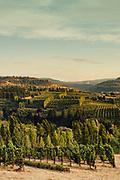 Analemma Vineyards in Mosier, Oregon at Sunset