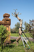 A supported tree near Hien Lam pavilion, Hue Citadel / Imperial City, Hue, Vietnam