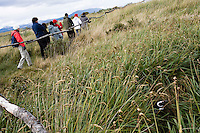 A Magellanic Penguin sleeps in the tall grass as tourists walk by on the Isla Martillo near Estancia Harberton and Ushuaia, Argentina. The island is the home of one of the largest penguin rookery in Tierra del Fuego.