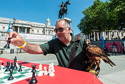 © Licensed to London News Pictures. 18/07/2021. LONDON, UK. Neve the Harris Hawk looks on as its handler plays chess at Chess Fest in Trafalgar Square. The Harris Hawk acts as a pigeon deterrent. Chess Fest celebrates the game of chess and visitors can learn the game, play chess or challenge a Grandmaster.  Also, to celebrate the 150th anniversary of Lewis Carroll's Alice Through the Looking Glass book which featured the game of the chess, 32 actors dressed as Alice Through the Looking Glass characters stand on a giant chessboard replaying a game based on the book.  Photo credit: Stephen Chung/LNP