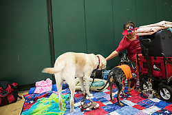 October 7, 2016 - Florida, U.S. - LOREN ELLIOTT   |   Times .Evacuee MJ Bouchard passes the time with her dogs at a Red Cross hurricane shelter at Burnett Middle School in Seffner, Fla., on Friday, Oct. 7, 2016. Many people displaced by Hurricane Matthew checked out  of the pet-friendly shelter Friday, but the shelter housed 75 people, six dogs and three cats Thursday night. (Credit Image: © Loren Elliott/Tampa Bay Times via ZUMA Wire)