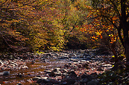 Small river across a sunny autumn forest