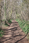 The Cotswold way running through woodland on Wotton Hill