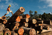 Sustainable Logging Operation.<br /> Iwokrama Forest Reserve<br /> GUYANA<br /> South America