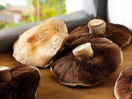 Mushrooms - Poratabello