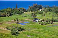 Maui, Hawaii.  The Keanae Peninsula where rough, black lava meets the gorgeous, blue ocean.  Home to a small community of Taro farmers.