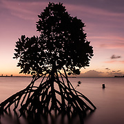 Mangroves in a bay in Black River, an area along the southwest coast.