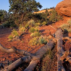 Colorado National Monument, CO. Monument Canyon. Desert.