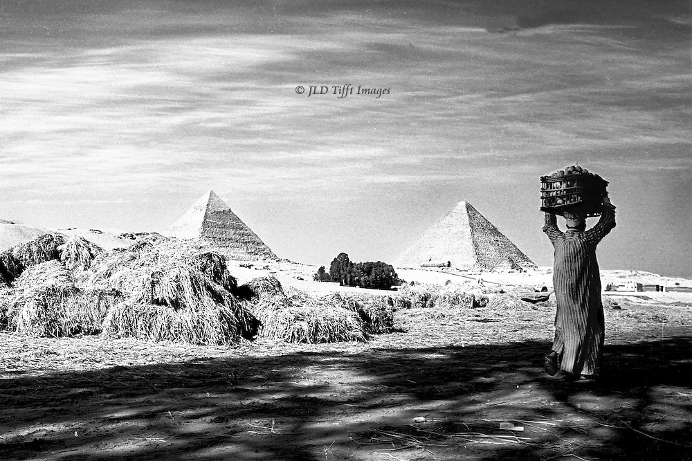 Man bearing crate of tomatoes on his head walks past a stack of straw bales.  It is in Giza; pyramids of Cheops and Chephren beyond. Black and white image.