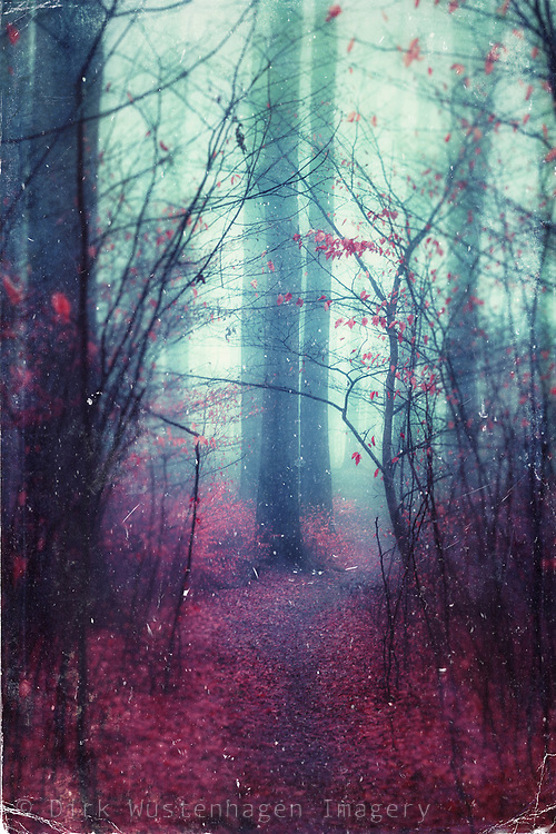 Dreamy forest scene in red and cyan