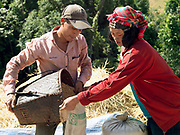 After threshing the rice in the upland field, an Akha Cherpia ethnic minority couple transfer the grain into sacks to carry down to the village. Swidden cultivation or 'hai' in Lao consists of cutting the natural vegetation, leaving it to dry and then burning it for temporary cropping of the land, the ash acting as a natural fertiliser. Shifting cultivation practices, although remarkably sustainable and adapted to their environment in the past, have come under increasing stress in recent decades and are now starting to be a major problem in Lao PDR, causing widespread deforestation and watershed degradation.