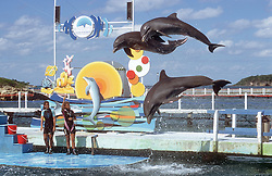 Display of dolphins jumping out of water near Guardalavaca; Cuba,