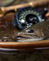 close up detail of a brook trout in the net while fly fishing in Vermont