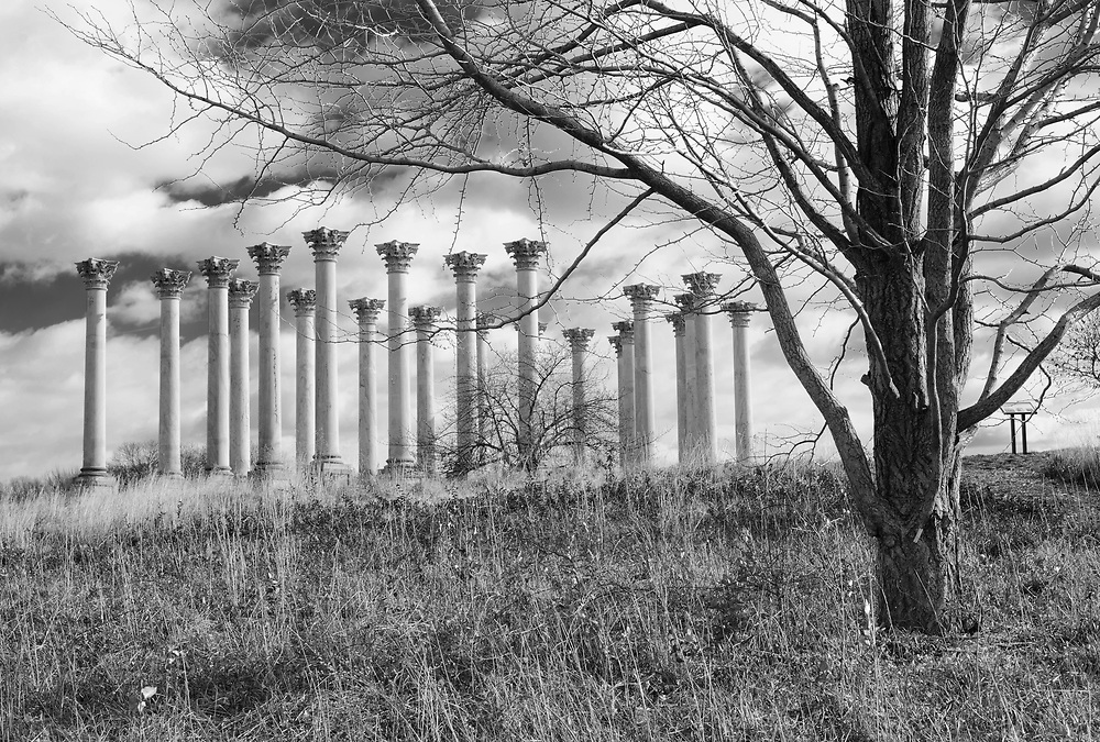 Capitol Columns that lined the east portico of the Capitol from 1828 to 1958 are seen in the Ellipse Meadow. National Arboretum. Washington, D.C.