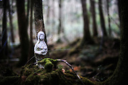 A porcelain figurine of what appears to be Mary holding the baby Jesus is bound to the base of a tree to commemorate someone who committed suicide in Aokigahara Jukai, better known as the Mt. Fuji suicide forest, which is located at the base of Japan's famed mountain west of Tokyo, Japan. ..