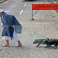 South America, Ecuador, Otavalo. A local farmer struggles to cross the road with his purchase of three little pigs at the Otavalo animal market.