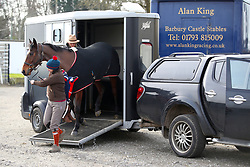 A horse is let out of a horsebox during Injured Jockeys Fund Charity Raceday at Plumpton Racecourse.