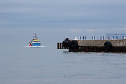 A fishing boat coming into Whitstable harbour  in Kent, England UK. June 4th 2008