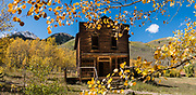 Aspen leaves turn yellow at Ashcroft ghost town, 1880s silver mining buildings, near Aspen, Colorado, USA. Ashcroft ghost town was a short-lived 1880s silver mining settlement, ten miles south of Aspen, in White River National Forest. Shallow silver deposits, high transportation costs, and competition from richer lower-elevation mines in Aspen caused Ashcroft's 1880 mining boom to go bust by 1883. The silver market crash of 1893 ultimately destroyed the town's prospects. Its peak population of 2000+ plummeted to 100 by 1895. Today more people visit Ashcroft each summer than ever lived here. Founded at 9500 feet elevation, Ashcroft was originally called Castle Forks City, then Chloride until 1882. This image was stitched from multiple overlapping photos.