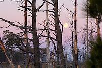 Moon over marsh, Chincoteague National Wildlife Refuge, Virginia, USA.