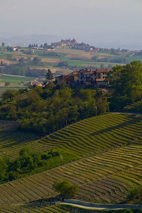 """Rolling green hillside landscape of Barolo wine country, next to Alba in Pinerolo area. Produces the """"king of wines"""" Barolo wine from Nebbiolo grapes. Hilltop and valley homes, red tile roofs on split level stucco homes, manicured farmland, tiered vineyards,one lane road in front of vinyard, trees provide windbreak. Alps in the background. Bella Baita"""