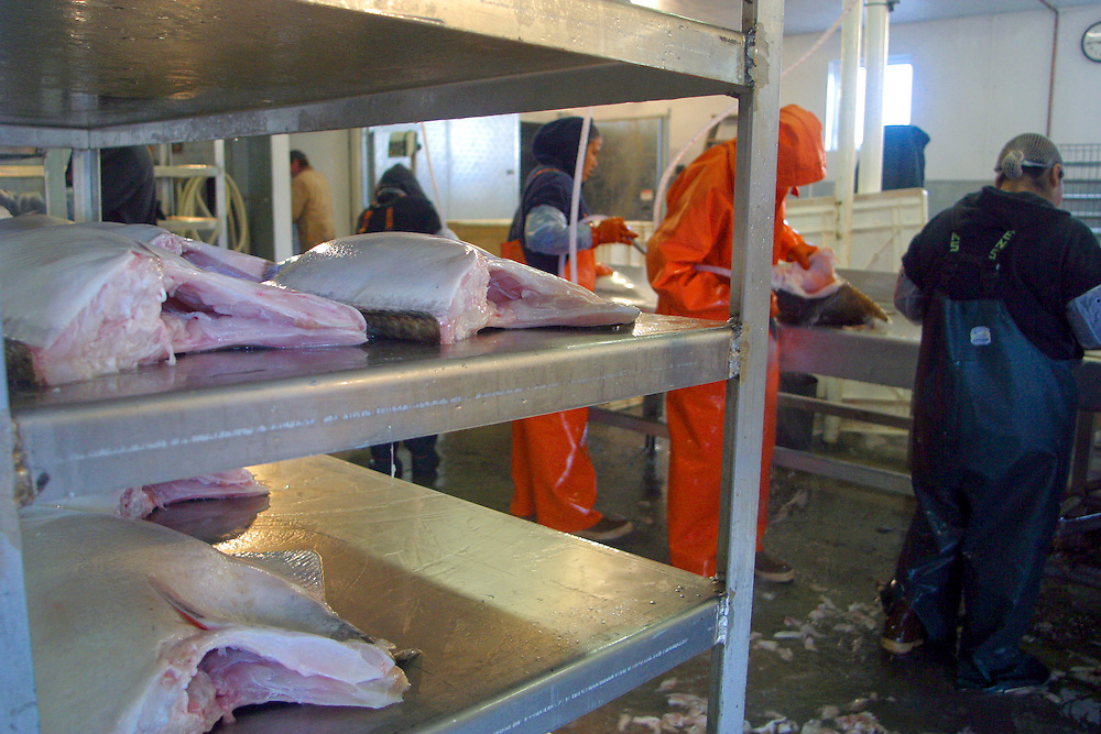 Processing halibut at Alaska Pride Seafoods Atka, Alaska