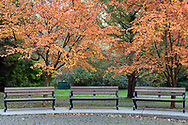 Three benches and some fall leaves at the Painter's Circle at Stanley Park in Vancouver, British Columbia, Canada