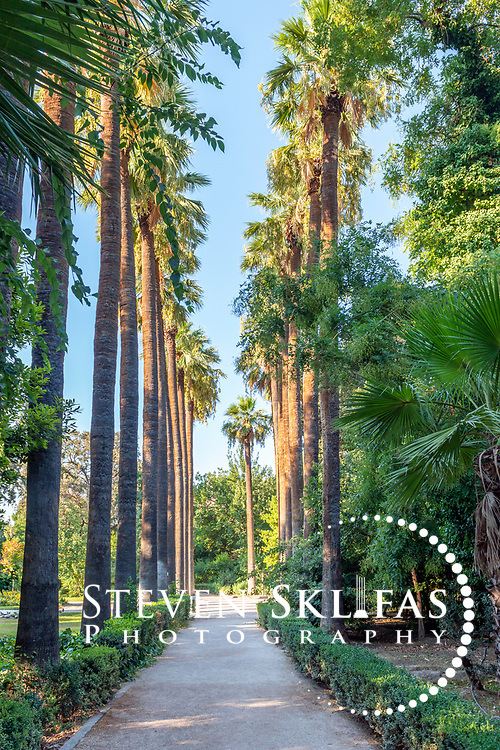 Athens. Greece. View of shady path lined by sub-tropical plants including Palm trees at the National Gardens, a vast green refuge and oasis in the centre of Athens.