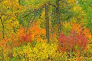 Autumn colors in Seine River Forest.<br />Winnipeg<br />Manitoba<br />Canada