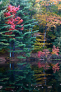 Fall colored trees reflected in Kenny Pond.