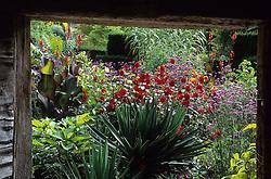 The exotic garden at Great Dixter. Planting includes Yucca gloriosa, Dahlia 'Grenadier', Arundo donax, Ailanthus altissima, Canna indica 'Purpurea' and Verbena bonariensis